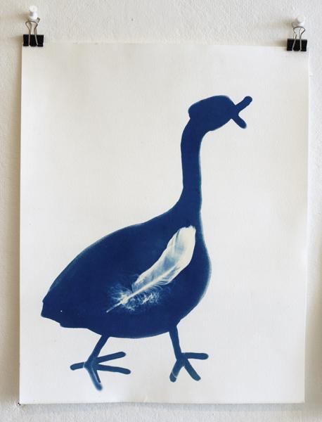 'The Goose', Cyanoprint, 2012